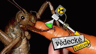 Proč už hmyz není tak velký? - Vědecké kladivo