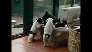 Puppies want milk but mom is tired