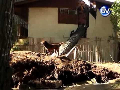 Ca da de rbol en el canelo destrozo casa 10 de agosto - Casa en el arbol ...