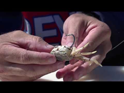 Whole Crab Bait