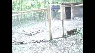 Cordwood Chicken Coop Aka The Chickens House