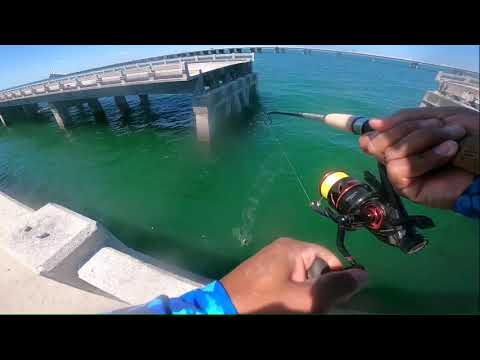 Snapper And Grouper Fishing At The Skyway Fishing Pier. Grouper Fishing St Pete Florida