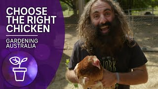 Choose the right chickens for your backyard   Beneficial animals and insects   Gardening Australia
