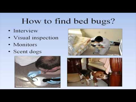 Bed Bug Training for Building Managers and Staff