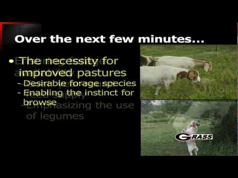 Forage Systems for Goat Production - Part 1