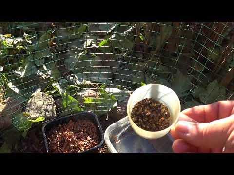 Вопрос: Как посадить пихту?