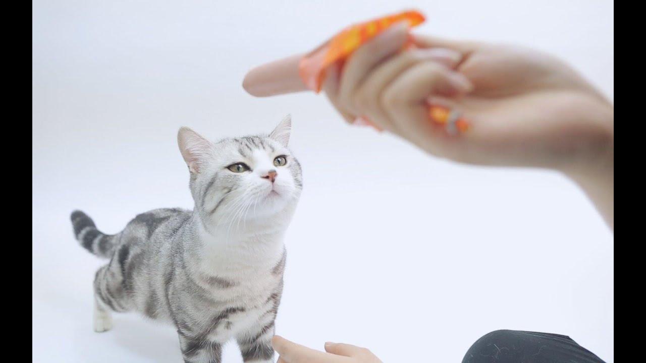 """宠物不能吃的10种食物!铲屎的,你可别不小心""""毒""""死我了啊"""