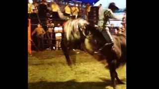 Toro rey de mil coronas rancho MS toros diamantes