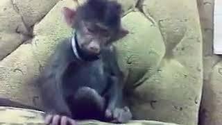 Прикол про обезьяну!!
