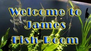 Welcome to James Fishroom!