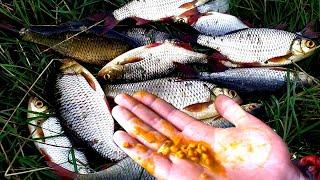 Вся рыба обожает эту насадку Клюет на каждом забросе