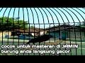 Top Masteran Di Jamin Burung Anda Langsung Gacor  Mp3 - Mp4 Download