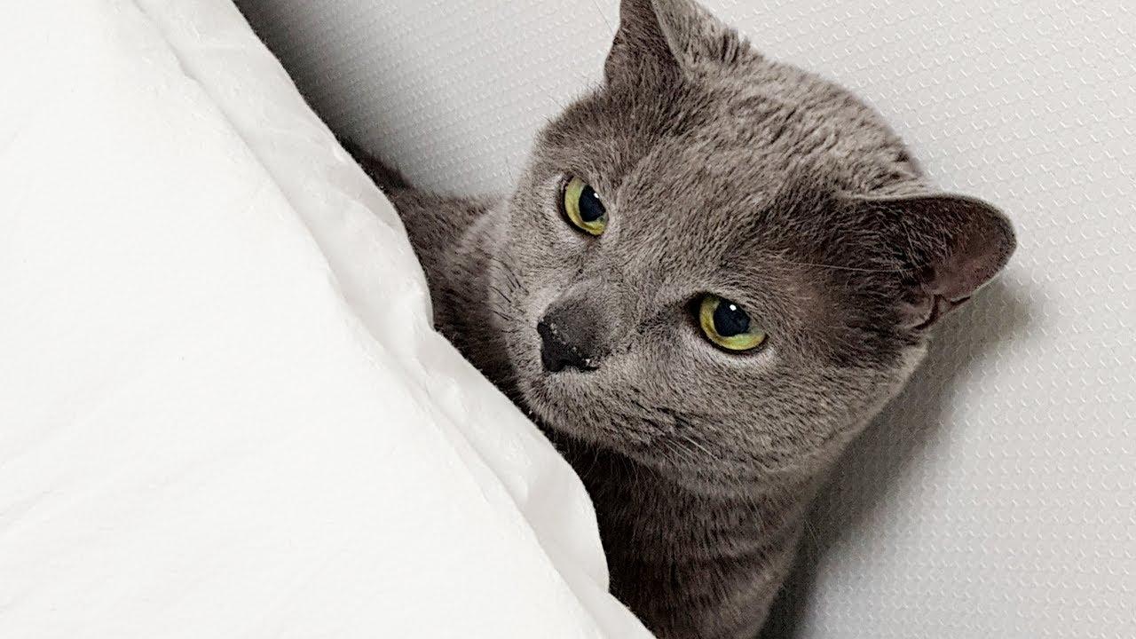 고양이 가만히 있는 영상