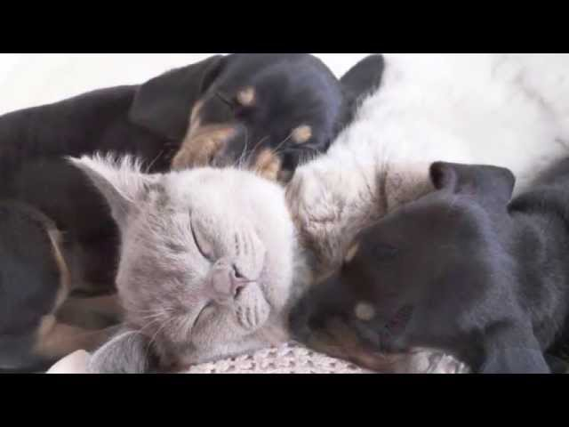 Pet Therapy: Relaxing Music Nature Sounds for Cats & Dogs