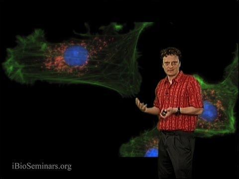 Nico Stuurman (UCSF): Fluorescence Microscopy