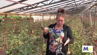 видео Теплицы для выращивания цветов