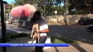 Video Pitoco, o cãozinho que foi atropelado por um guincho download MP3, 3GP, MP4, WEBM, AVI, FLV Agustus 2018