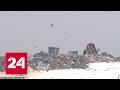 Свалки в России исчезнут: куда денутся отходы