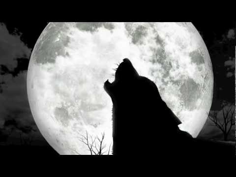 Wolves Howling At The Moon - YouTube  Wolves Howling ...