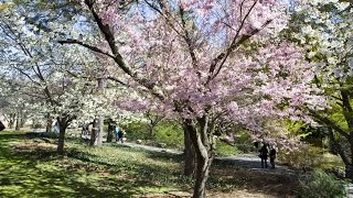 Top 10 Best Parks in New York City