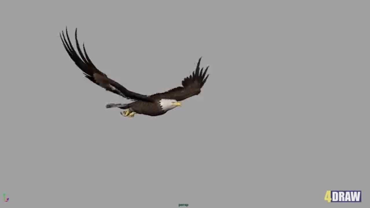 Eagle Flight Cycle
