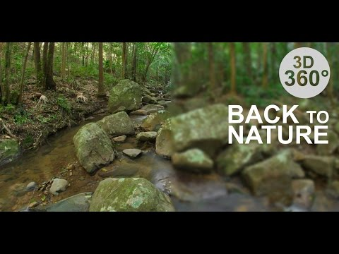 Back to Nature 2 - Rainforest (Stereoscopic 360° VR Video)
