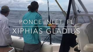 Daytime Swordfishing