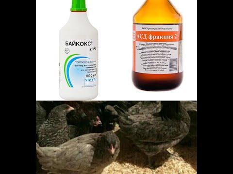 Кокцидиоз Байкокс АСД 2 # Профилактика заболевания у кур.