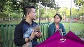 Indonesia Cat Association - Weekend List