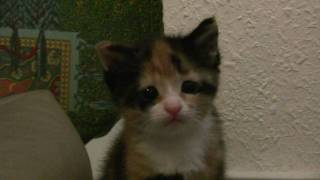 "Cute Kitten Luna says ""I´m so sorry. Please forgive me!"""