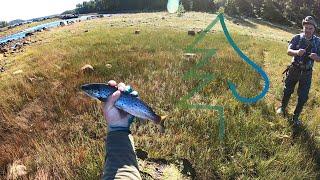Ловля кумжи. Часть 2. Тайга у Белого моря 2. Рыбалка в Карелии.