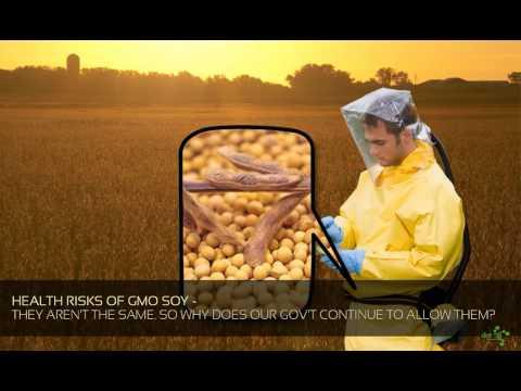 Health Risks of GMO Soy