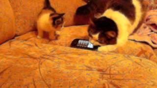 Кошка и мяукающий телефон