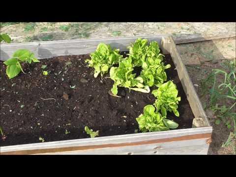Gartensaison 2017 - Es wächst und gedeiht -