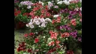 уход за комнатными растениями /пересадка комнатных растений /комнатные растения неприхотливые(, 2015-02-01T21:06:56.000Z)