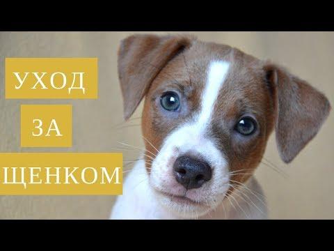 Уход за щенком | Что купить для щенка | В доме появился щенок