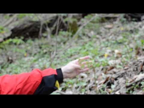 JMC Natural Medicine - Glade Creek, West Virginia Natural Walk 3