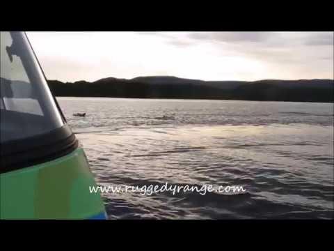 Bottlenose Dolphins in Paterson Inlet, Stewart Island
