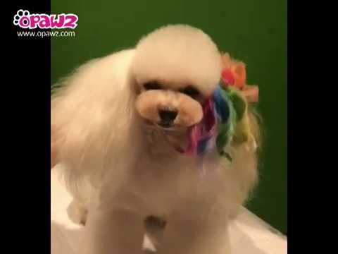OPAWZ Creative Grooming -  Pet Chalks Tutorial