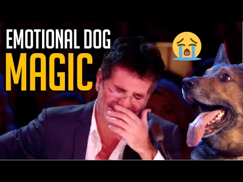 Download Emotional Magic Dog Acts That Made Simon Cowell Cry 😢 [and other dog magicians]