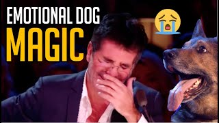 Emotional Magic Dog Acts That Made Simon Cowell Cry  [and other dog magicians]