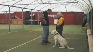 American Bulldog's Obedience & Man Work Training! (son Of Hog Hammer)