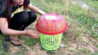 Creative Girl Make Fish Trap Using Plastic Bottle And Basket To Catch A Lot of Fish