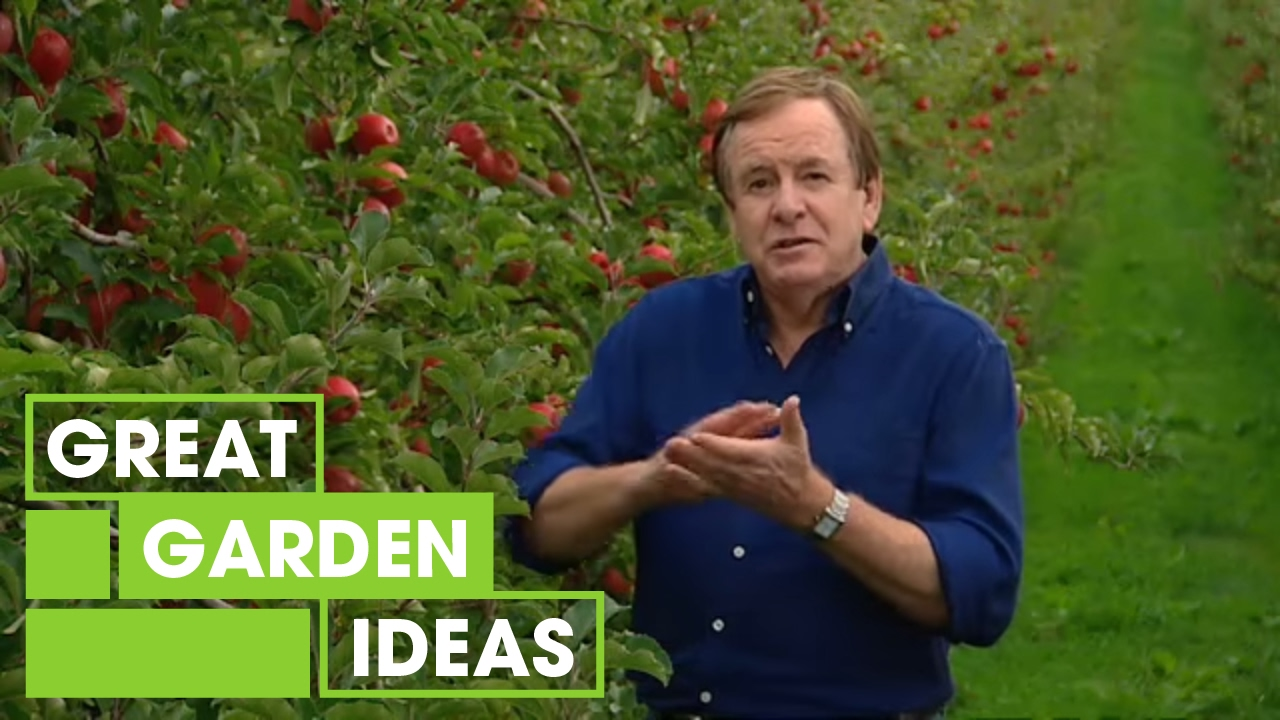 How To Grow An Apple Tree | Gardening | Great Home Ideas