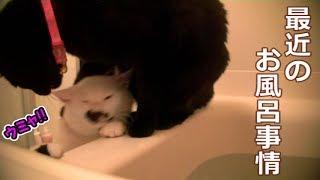以前 カトペンが入浴中 お風呂を覗きに来ていたビター先輩とシシマルの...
