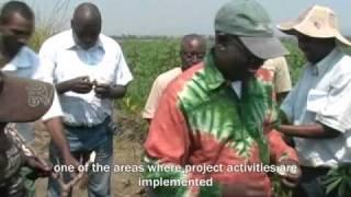 Cassava project-- DRC