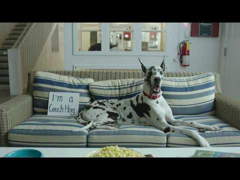 Visit the No-Kill Los Angeles (NKLA) Pet Adoption Center In West Los Angeles
