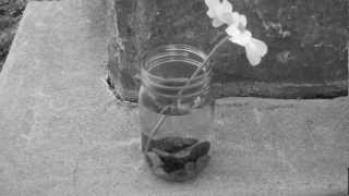 mollusk (thewaybackyard - song twenty-eight 7/30/12)
