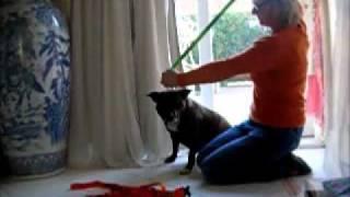 Dog Awareness Tri-colour Collars & Leads   Http://www.friendlydogcollars.co.uk/