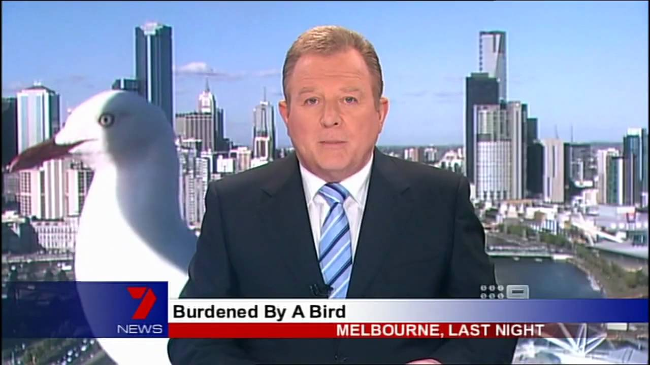 Full Story of Giant Seagull on 6pm Live News behind Anchor - YouTube